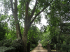 Lythwood Lodge gardens (2)