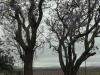 Vic Rohrs Farm - Luneberg (burnt during Boer  War - S 27.19.55 E 30.36.14 - 1862 (1)