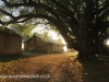 Thorner Estates - Outbuildings & Trees (31)