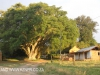 Thorner Estates - Outbuildings & Trees (33)