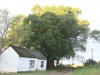 Thorner Estates - Outbuildings & Trees (36)