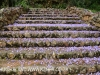 Marrianhill - steps to the Grotto (6)