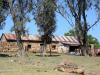 Ongeluksnek Valley Farm 8 S 30.18.16 E 28.22.55 (7)