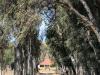 Ongeluksnek Valley Farm Esbi Khaya Farm S 30.18.16 E 28.22.55 (5)