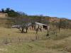 Ongeluksnek - farm (2)