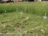 Ladysmith -Van Riebeck Street - Grave                 - 28.33.47 S 29.45.36 E -  (8)