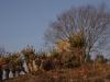 estcourt-fort-durnford-s29-00-964-e-29-53-301-elev-1170m-1