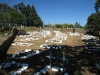 utrecht-old-military-graves-general-views-voor-street-s-27-39-16-e-30-19-38-5