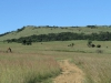 vryheid-hill-nature-reserve-lt-col-gawne-site-kings-own-regt-royal-lancaster-regt-s-27-45-53-e-30-57-11-dec-1900-5