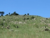 vryheid-hill-nature-reserve-north-gun-site-signal-hill-s-27-44-32-e-30-47-33-elev-1464m-6