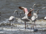 Mkuze Game Reserve & St Lucia False Bay