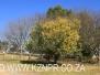 Mooi River - Greenfields - Piccione