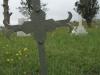 mooi-river-cemetary-boer-prisoner-j-jooste-died-01-04-1900