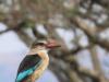 Ukuthula - Kingfisher