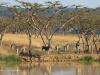 Ukuthula -  Zebra at dam (5)