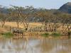 Ukuthula -  Zebra at dam (6)
