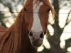Ukuthula - horse