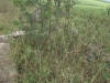 stead-douglas-pellew-cemetery-overgrown
