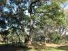 Mtunzini Cemetery - Grave - overall views (4)