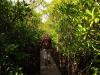 Mtunzini Board Walk (1)