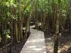 Mtunzini Board Walk (3)