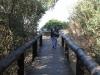 Mtunzini - Boardwalk & Beach views  (3)