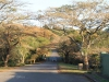 Mtunzini -Link road to lagoon -   (6)