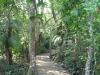 mtunzini-rafia-palm-monument-s28-57-458-e-31-45-668-elev-3m-1