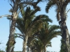 mtunzini-rafia-palm-natures-way-s-28-57-458-e-31-45-943-elev-1m-1
