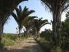 mtunzini-rafia-palm-natures-way-s-28-57-458-e-31-45-943-elev-1m-3
