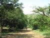 Nagle Dam camp site (3)