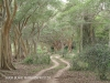 Ndumo Game Reserve fig  & fever tree forest (23)