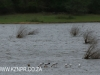 Ndumo Game Reserve pans (2)