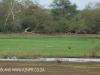 Ndumo Game Reserve pans (4)