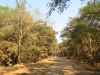 Ndumo Village - Approach Road (1)