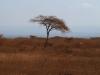 Ndumo Village - Bush