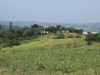 Ndwedwe Road - P100 - Farm - Derelict - 29.35978 S 31.03806 E (1)