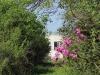 Ndwedwe Road - P100 - Farm - Derelict - 29.35978 S 31.03806 E (2)