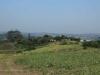 Ndwedwe Road - P100 - Farm - Derelict - 29.35978 S 31.03806 E (3)