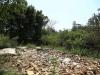 Ndwedwe Road - P100 - Farm south of P100 (20)