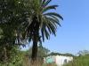 Ndwedwe Road - P100 - Farm south of P100 (21)