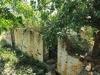 Ndwedwe Road - P100 - Farm south of P100 (23)