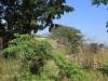 Ndwedwe Road - P100 - Farm south of P100 (28)