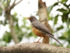 New Germany Nature Reserve - Aviary - birds (1)
