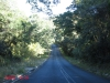 Nkandla forest -  (10)