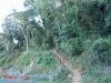 Nkandla forest -  (3)