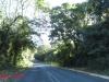 Nkandla forest -  (9)