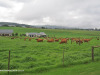 Gowrie-Farm-pastures-1