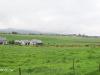 Gowrie-Farm-pastures-2