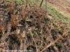 Oliviers Hoek Farm graves (6)